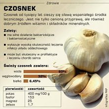 Czosnek