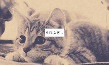 Mały kot, przyczajony lew ;3
