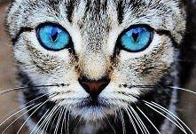 zakochałam się w tych oczach ;D