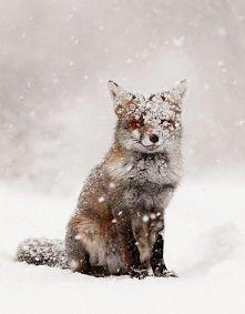 Jak miło pruszy śnieg...