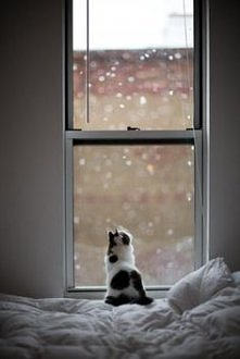 W czasie zimy kotki się nudzą