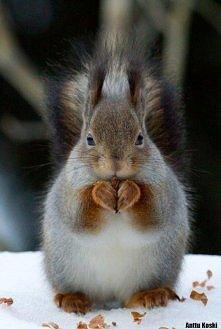 Słodka wiewiórka. <3