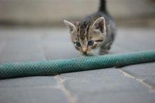 mój kochany kotek <3