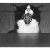 Kotek <3 To NIE jest moja fotografia