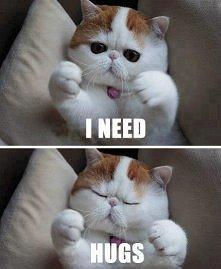 Koteł <3