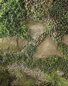 ścieżka - raczej mało uczęszczana, w jakimś zakamarku ogrodu