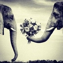takie tam słonie ;) Też obchodzą Święto Zakochanych? :)