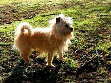 moja psinka, dziś w parku &...