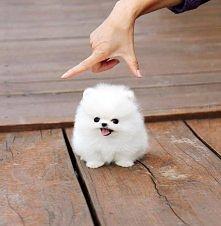 *O* to nie pies to srające tęczą stworzonko z Nibylandii