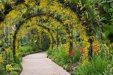 tunel z kwiatów <3