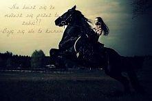Konie.. Według niektórych s...