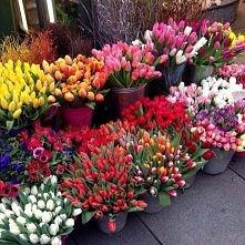 Tulipany <3   Wiosna tuż...