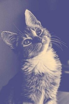 cute lil cat