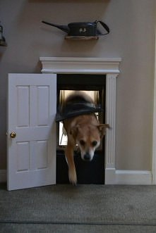 drzwi dla zwierzaka:)