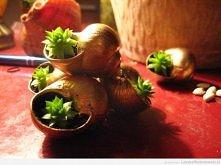 Zgrupowane w piramidę roślinki