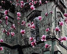 Wiosna w rozkwicie, Paryż, ...