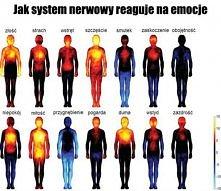 Jak system nerwowy reaguje ...