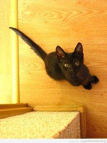 Kot Sheldon prawie 4 lata temu ^^ mały wytrzeszcz