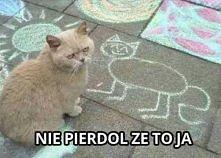 załamka kota xd