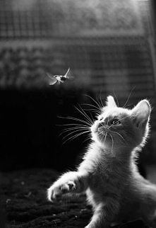 Cat and Bee.