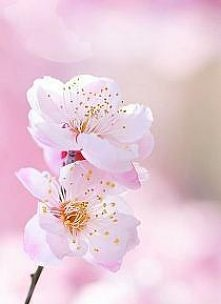 spring :)