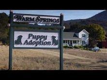 """*** świetna reklama ***  Budweiser Super Bowl XLVIII Commercial -- """"Puppy Love"""""""