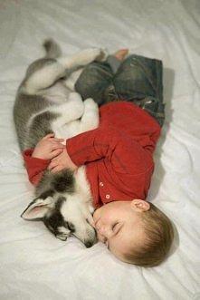 jakie to słodkie <3  Maluszek i go wierny przyjaciel husky ♥