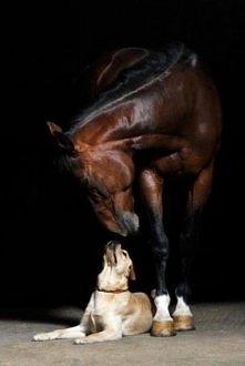 kocham konie i psy a wy? :))