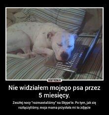pies też potrafi kochać !