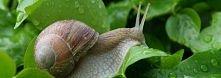 kilka sposobów jak pozbyć się ślimaków z ogrodu ;)  Możne walczyć z nimi twor...