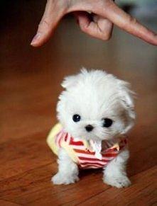 Jaka mała słodka psinka <3