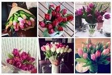 jakie kwiaty Wam kojarzą się z wiosną? Tulipany, narcyzy, fiolki?