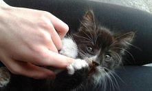 Kociaczek ♥