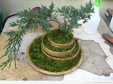 19 z 22. drzewko z dodatkiem mchu ^^