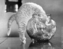 Urocze kociaki:) jak sie ta...