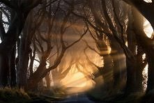 Nie ma to jak spacer po lesie z samego rana ;-)