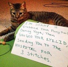 Ćwiczenia ze zwierzętami w ...