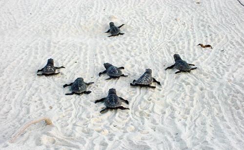 żółwie :)