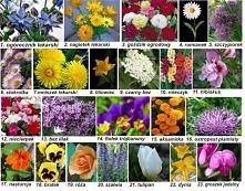 Lista popularnych kwiatów jadalnych:  kwiaty ozdobne: aksamitki, begonie, bła...