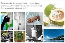 Woda z wnętrza młodego kokosa ma skład niemal identyczny jak osocze ludzkiej ...