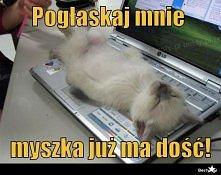 Głaskej kota :P