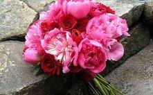 Piwonie  Kwiaty królewskie,...