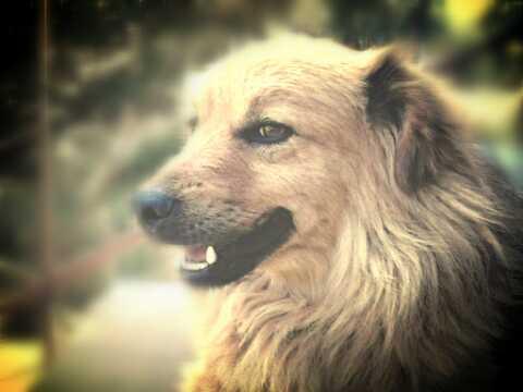 kochany pies <3 najlepszy na świecie #dogs #love