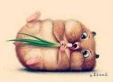 Chomicek!!! ♥