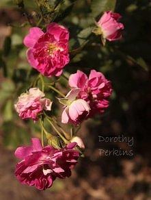 """Dorothy Perkins"""