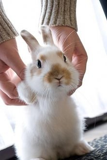 biały słodki króliczek  czy nie jest uroczy? <3