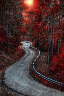 Autumn Road, Bosque Country, Hiszpania