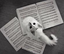 Kotełek <3