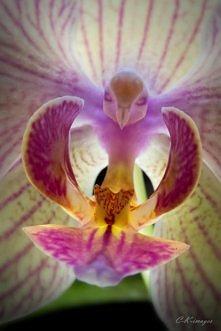 cudowny storczyk <3