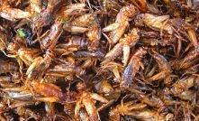 Pieczone robale  Z wyjątkiem Północnej Ameryki i Europy pieczone robale wcale nie są uznawane za obrzydliwe dania. W Azji są postrzegane jako bardzo popularna przekąska. Owady b...